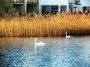 reeds-023.jpg