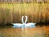 reeds-024.jpg